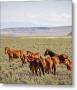 Wild Horse Mesa Metal Print
