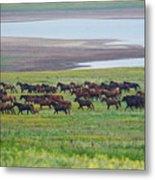 Wild Horses #34 Metal Print