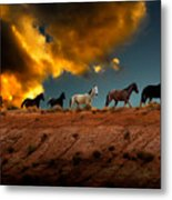 Wild Horses At Sunset Metal Print by Harry Spitz