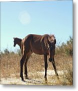 Wild Horses Desert Of Mexico Metal Print