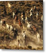 Wild Horses Gone Wild Metal Print