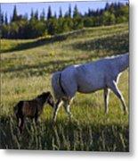 Wild Horses Near Glacier National Park Metal Print