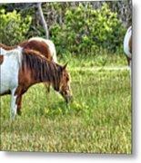 Wild Horses Of Assateague 5 Metal Print