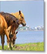 Wild Horses Of Assateaque Metal Print