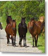 Wild Horses Of Corolla Metal Print