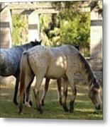 Wild Horses Of Cumberland Metal Print