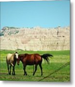 Wild Horses Of South Dakota Metal Print
