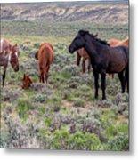 Wild Horses Of White Mountain Metal Print