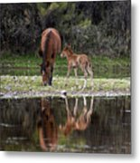 Wild Horses Reflected In The Salt River Metal Print