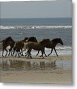 Wild  Horses Run On The Beach Metal Print