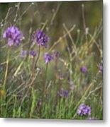 Wild Hyacinth At Sunset Metal Print