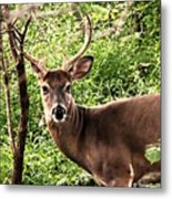 Wild In The Country Metal Print