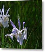 Wild Iris 4 Metal Print