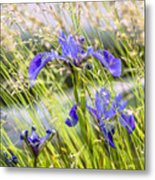 Wild Irises Metal Print