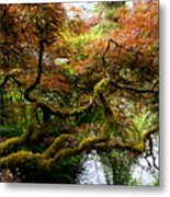 Wild Japanese Maple Metal Print