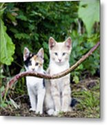 Wild Kats Metal Print