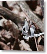 Wild Lily Metal Print