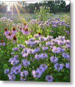 Wild Mints And Coneflowers Metal Print