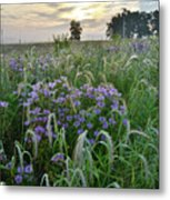 Wild Mints And Foxtail Grasses At Glacial Park Metal Print
