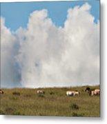 Wild Mongolian Horses Metal Print