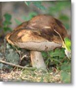 Wild Mushroom Metal Print