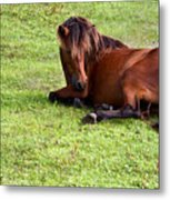 Wild Mustang At Rest Metal Print