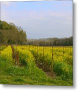 Wild Mustard Fields Metal Print