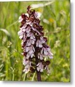 Wild Orchid In Meadow  Metal Print