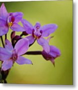 Wild Orchids 2 Metal Print