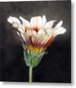 Wild Petal Dreams Metal Print