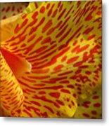Wild Petals Metal Print by Jeannie Burleson
