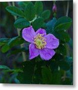 Wild Rose 1 Metal Print