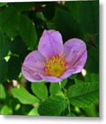 Wild Rose 4 Metal Print