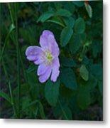 Wild Rose 6 Metal Print