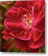 Wild Rose As Oil Metal Print