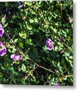 Wild Rose Habitat Metal Print