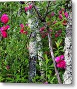 Wild Rose In Sumac Metal Print