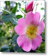 Wild Roses 2 Metal Print