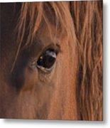 Wild Stallion's Eye Metal Print