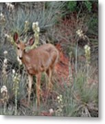 'wild' Times At Garden Of The Gods Colorado Metal Print by Christine Till