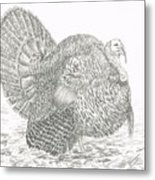 Wild Tom Turkey Metal Print