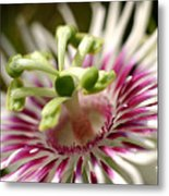 Wild Tropical Flower Metal Print