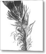 Wild Turkey Feather Metal Print