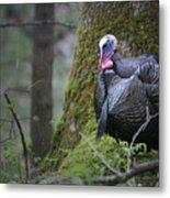 Wild Turkey Great Smoky Mountains National Park Metal Print