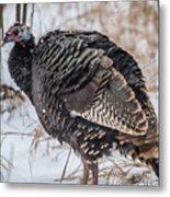 Wild Turkey Not The Whiskey Metal Print