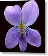 Wild Violet On Black Metal Print