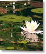Wild Water Lilly Metal Print