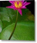 Wild Water Lily Metal Print