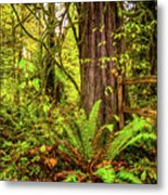 Wild Wonder In The Woods Metal Print