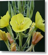 Wild Yellow Metal Print